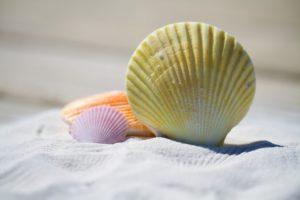 porcerősítés zöldkagyló kapszulával hatékonyan